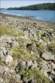 16.2210=+2130-1 Dunes grises de la mer du Nord et de la Manche à Corynephorus canescens Charente Maritime