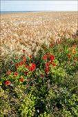 Terres agricoles et paysage artificiels